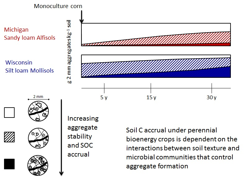 Trajectory of aggregate formation and stabilization and concurrent SOC accrual under perennial grasses in Michigan (MI) sandy loam versus Wisconsin (WI) silt loam soils, where time zero represents status of land under continuous corn, prior to conversion to a perennial cropping system. Time zero and the first five years of the trajectory are based on data from the current study, the trajectory > 5 y is based on model proposed by Tisdall and Oades (1982).