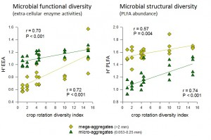 Crop rotation diversity index versus (a) microbial enzyme activity diversity and (b) PLFA diversity in relation in mega- or micro-aggregates. The calculated Shannon-Weiner diversity (H) is relevant for between rotation comparisons at this site, but is not a 'true' measure of diversity because maximum richness was determined a priori.